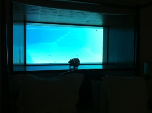 My pool view window